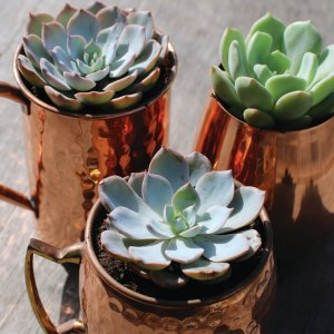 Custom Copper Mugs
